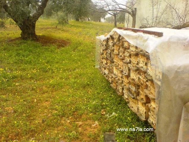 خلايا نحل العسل (أنواعها، طرائق تصنيعها، طرائق صناعة تصاميم خاصة) bb15a.jpg